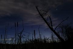 Nacht im Haspelmoor