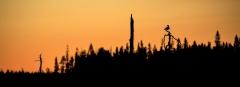 Scherenschnitt - Möwe im Sonnenuntergang