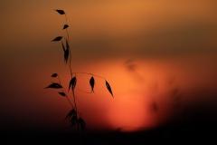 Abendrot am Feldrand II - Natur als Grafiker