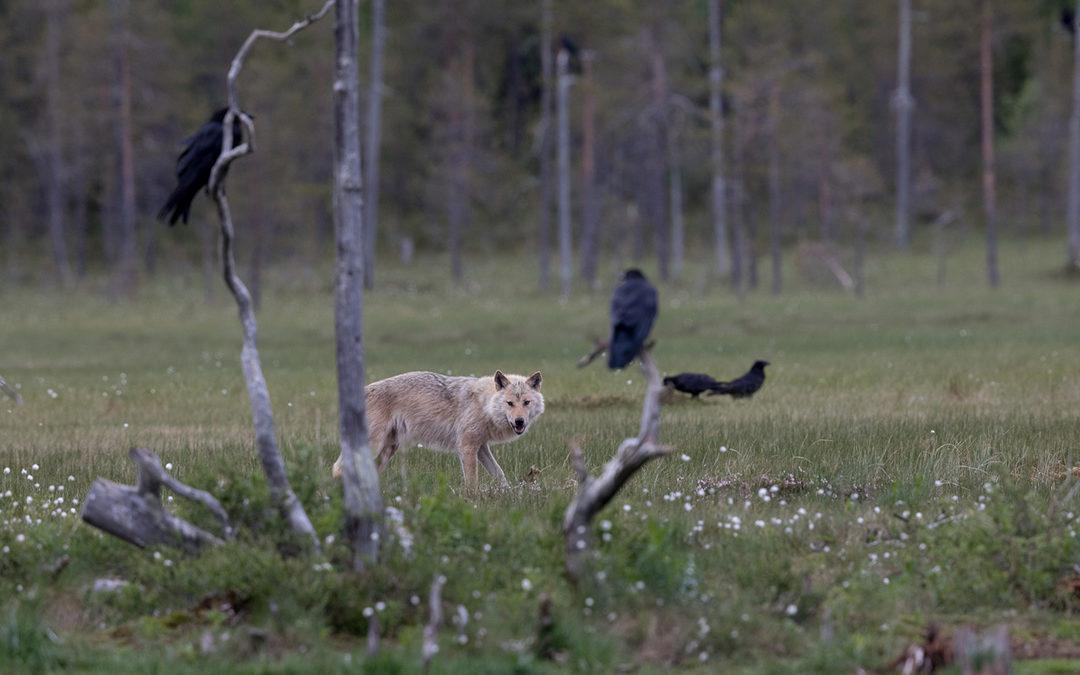 Begegnungen im Grenzwald zu Russland